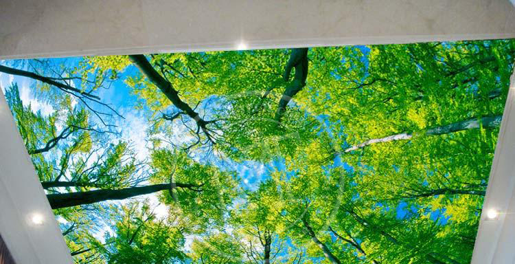 Soft Film Ceiling, Roll To Roll UV Printer Printing Sample!MT Digital Industry - Eco Solvent Printer, Solvent Printer, UV Printer, Digital Textile Printer Manufacturer & Supplier!